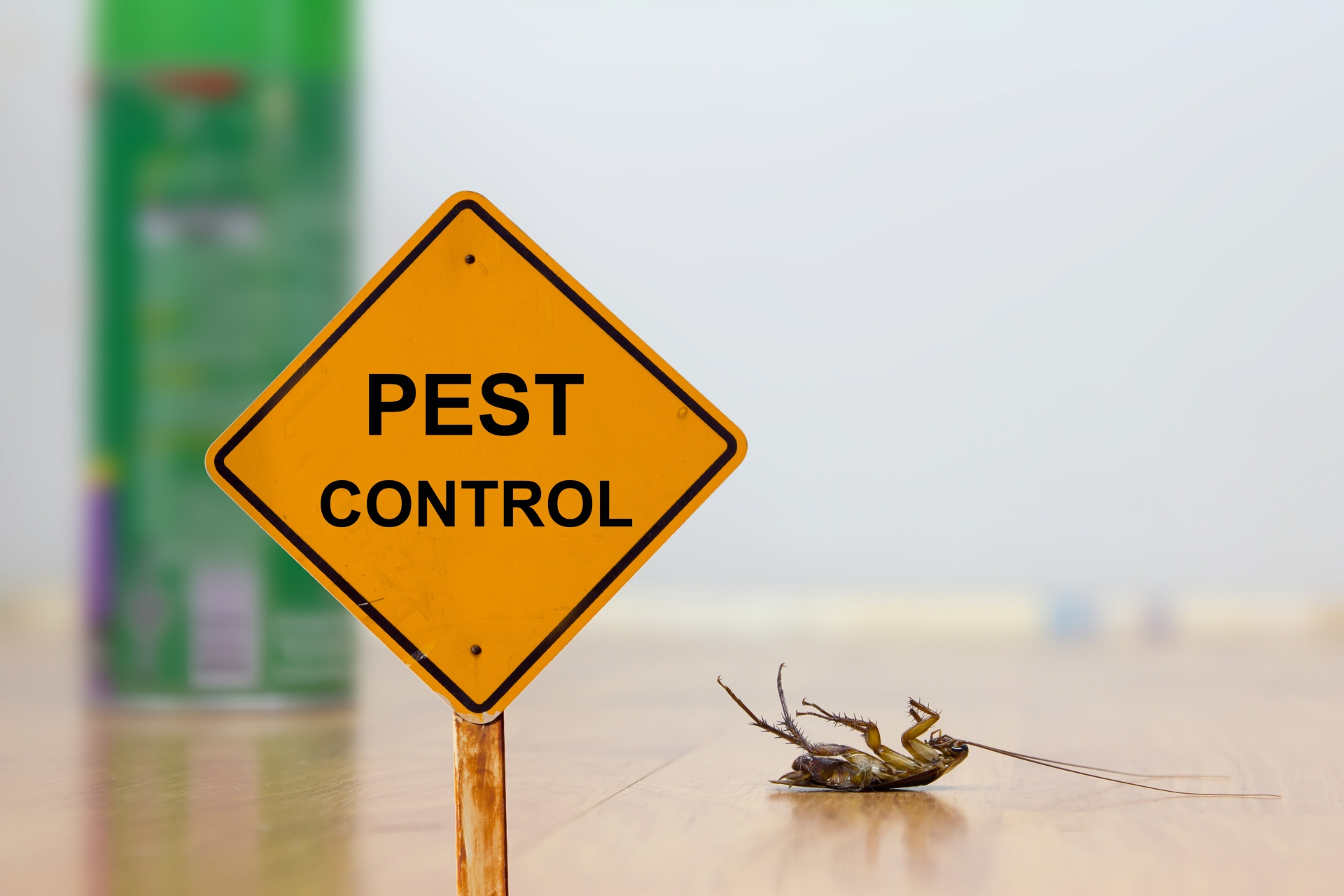 24 Hour Pest Control, Pest Control in St Paul's, Fleet Street, EC4. Call Now 020 8166 9746