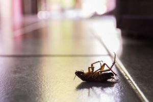 Ant Control, Pest Control in St Paul's, Fleet Street, EC4. Call Now 020 8166 9746